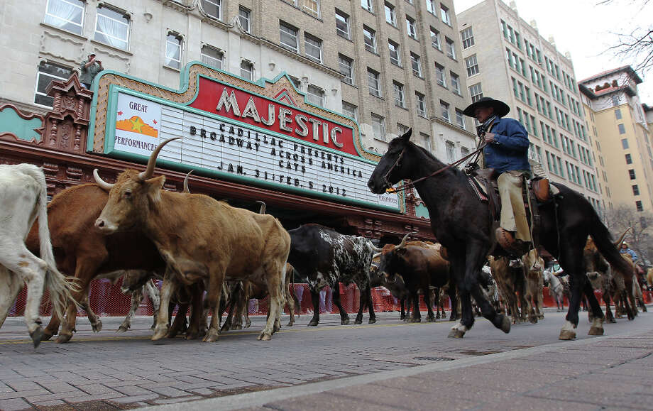 The Western Heritage Parade and Cattle Drive last year. Photo: Kin Man Hui, San Antonio Express-News / San Antonio Express-News