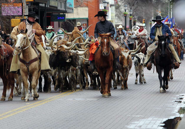 Cowboys guide several heads cattle down Houston Street in 2012. Photo: Kin Man Hui, San Antonio Express-News / San Antonio Express-News
