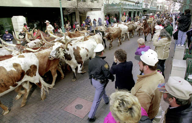 In 1998, crowds watch cattle head stroll east on Houston Street. Photo: DOUG SEHRES, SAN ANTONIO EXPRESS-NEWS / SAN ANTONIO EXPRESS-NEWS