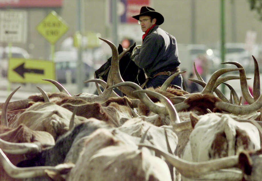 A Cowboy steers the herd at the end of the drive near the corner of Houston Street and Avenue E in 1999.