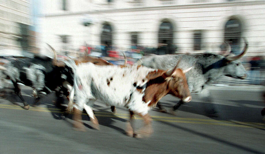 Longhorns make their way down Houston Street commemorating the reopening of the Buckhorn Museum.