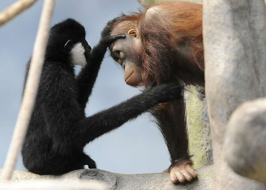 You're burning up. Have you had a flu shot? There's a bug going around at Chicago's Brookfield Zoo. Fortunately, Thani Gibbon, M.D., makes house calls. Photo: Jim Schulz, Associated Press