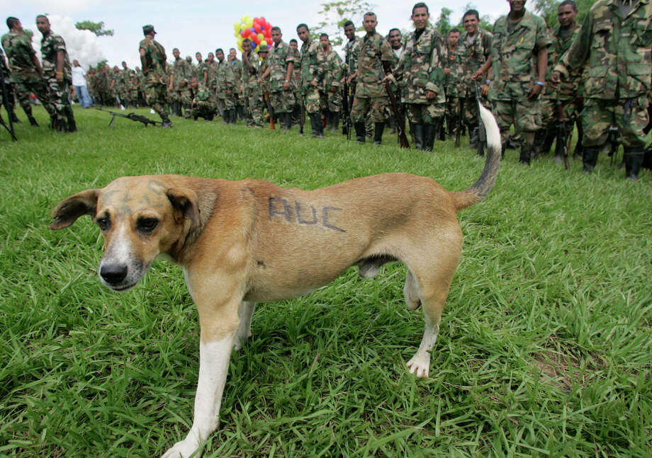 Pet tattoosThis dog has a tattoo because it's off fighting drug traffickers in Columbia. Your dog, who might wake up at 1 p.m. to take a leisurely stroll from the sofa to the water bowl, does not merit a tattoo. But, if you think he's tough enough, you can get him a temporary tattoo, like a shamrock for St. Patrick's Day, or perhaps the Baltimore Ravens for the Super Bowl. Photo: JAVIER GALEANO, AP / AP