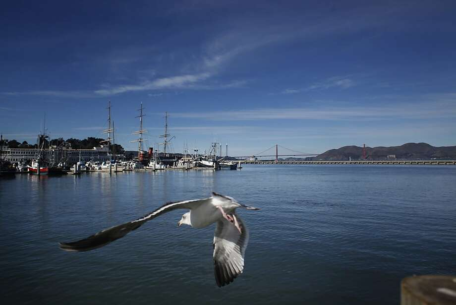 Under a mostly clear sky, seagulls and fishing boats surround the Golden Gate near Fisherman's Wharf on Monday. Photo: Mike Kepka, The Chronicle