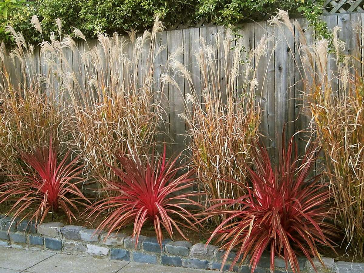 By choosing tall, narrow, porcupine grass (Miscanthus sinensis strictus) and a small variety of New Zealand flax, this gardener has stayed pretty well within a narrow border. In summer, the grass leaves will be green with bright yellow bands.