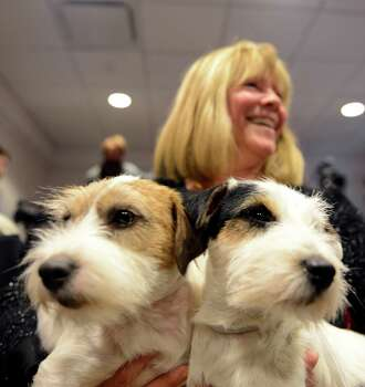 Madison (L) and Pepper (R), two Russell Terriers, pose with owner Sue Sobel before a press conference January 28, 2013 by The Westminster Kennel Club to introduce two new breeds that will compete in the 137th annual Westminster Dog Show in New York. Treeing Walker Coonhounds will be the second new breed to compete in the show which will take place February 11-12. AFP PHOTO/Stan HONDASTAN HONDA/AFP/Getty Images Photo: STAN HONDA, AFP/Getty Images / AFP