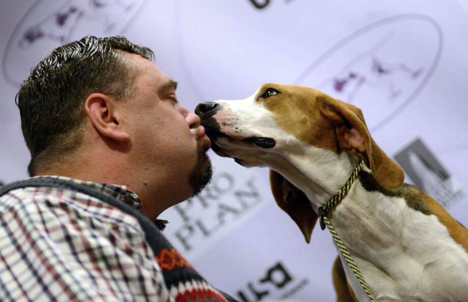Curt Willis (L) kisses one of his Treeing Walker Coonhounds during a press conference January 28, 2013 by The Westminster Kennel Club to introduce two new breeds that will compete in the 137th annual Westminster Dog Show in New York. Russell Terriers will be the second new breed to compete in the show which will take place February 11-12. AFP PHOTO/Stan HONDASTAN HONDA/AFP/Getty Images Photo: STAN HONDA, AFP/Getty Images / AFP