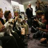 NEW YORK, NY - JANUARY 28:  Russell Terriers are held for photographers at a press conference for the 137th Annual Westminster Kennel Club Dog Show on January 28, 2013 in New York City.  This year's event will feature two new breeds, Treeing Walker Coonhounds and Russell Terriers and will take place February 11 and 12.