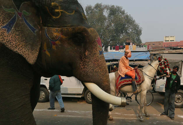 An Indian holy man rides a horse during a religious procession towards the Sangam, the confluence of the rivers Ganges, Yamuna and mythical Saraswati, ahead of the Maha Kumbh festival in Allahabad, India, Saturday, Jan. 12, 2013. Millions of Hindu pilgrims are expected to take part in the large religious congregation of a period of over a month on the banks of Sangam during the Maha Kumbh festival in January 2013, which falls every 12th year. (AP Photo/Manish Swarup) Photo: Manish Swarup, ASSOCIATED PRESS / AP2013