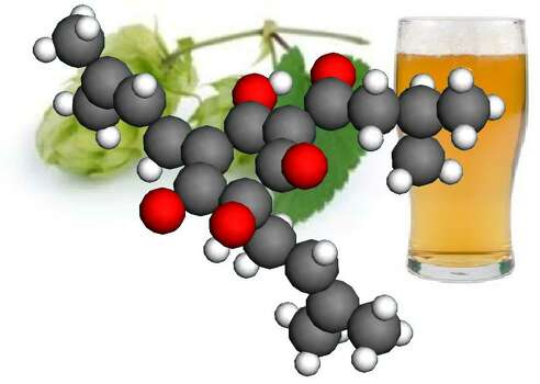 The configuration of a humulone molecule is superimposed on a hops vine and a glass of beer.