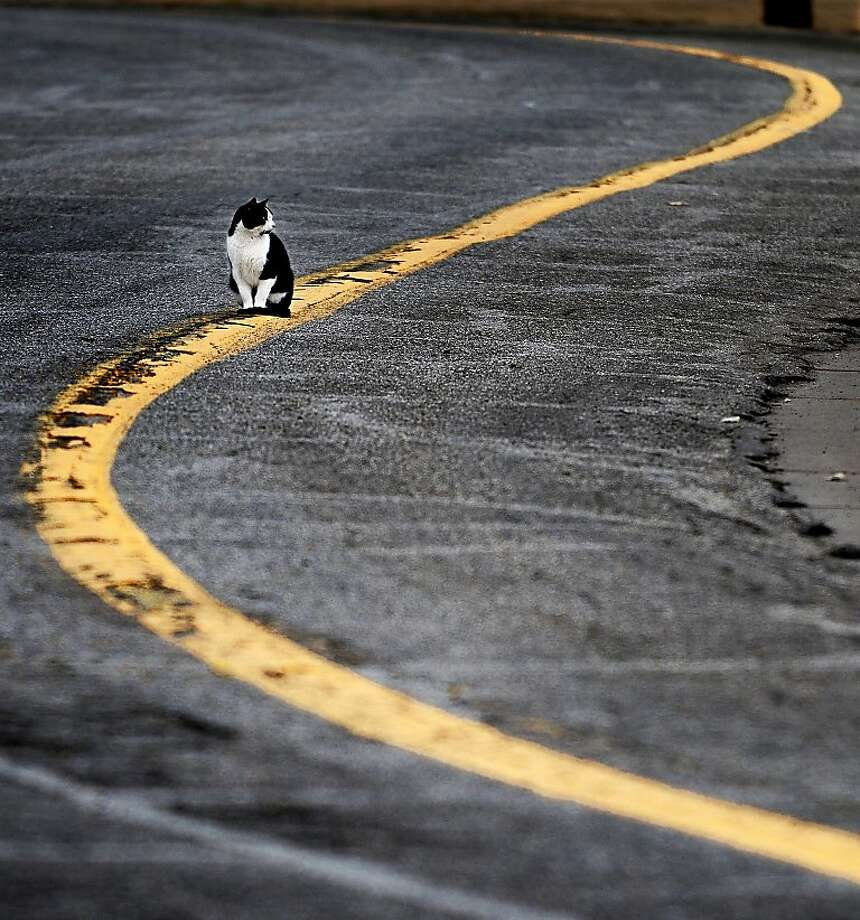 It's lonely being a middle-of-the-roader in a red state. (Salina, Kansas.) Photo: Tom Dorsey, Associated Press