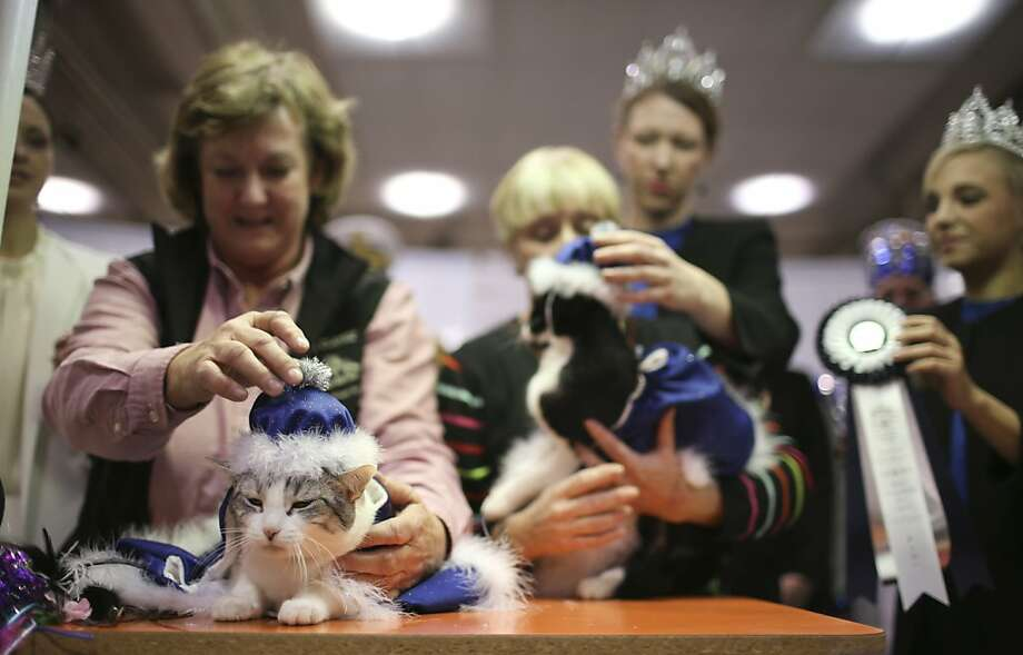 That's a lot of title for a little kitty: Judy McManama adjusts the hardware on Maggie May, the newly crowned Household Pet Queen of the 37th Annual Saintly City Cat Club Annual Championship Cat Show in St. Paul, Minn. Photo: Jeff Wheeler, Associated Press