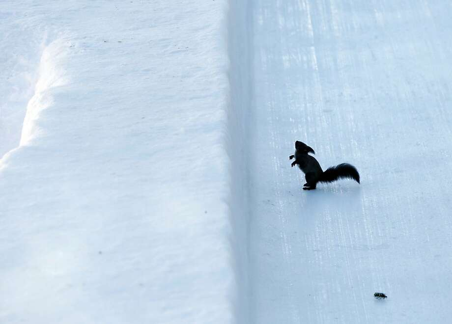 Sorry, I couldn't hold it: Looks like someone had an accident on the bobsled course at the World Championships in St. Moritz, Switzerland. Photo: Arno Balzarini, Associated Press