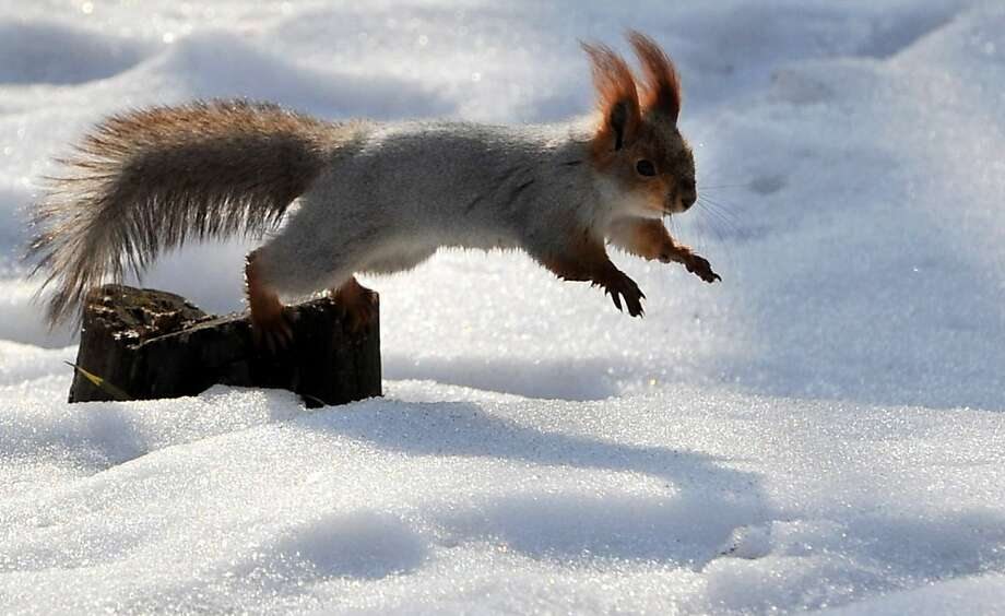 Belly flop! I think I see another acorn over there. (Bishkek, Kyrgyzstan.) Photo: Vyacheslav Oseledko, AFP/Getty Images