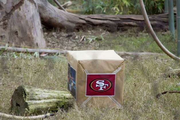 This box, containing two smaller identical boxes with a 49ers blanket in one and a Ravens blanket in the other, sits awaiting the predictive powers of Siabu, an orangutan at the Fresno Chaffee Zoo tasked with picking this year's Super Bowl winner.