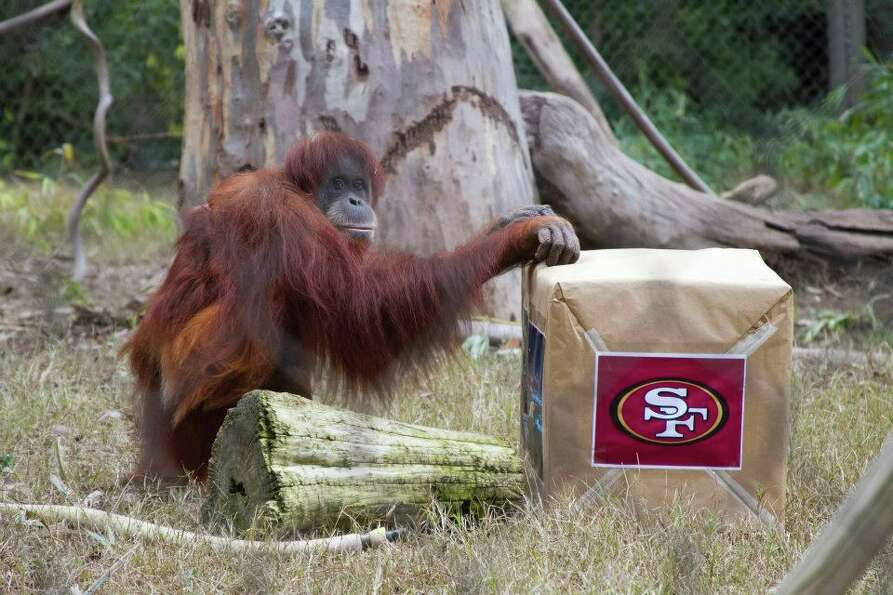 Siabu approaches. Cue drum roll. The Niners logo on the side seems promising.