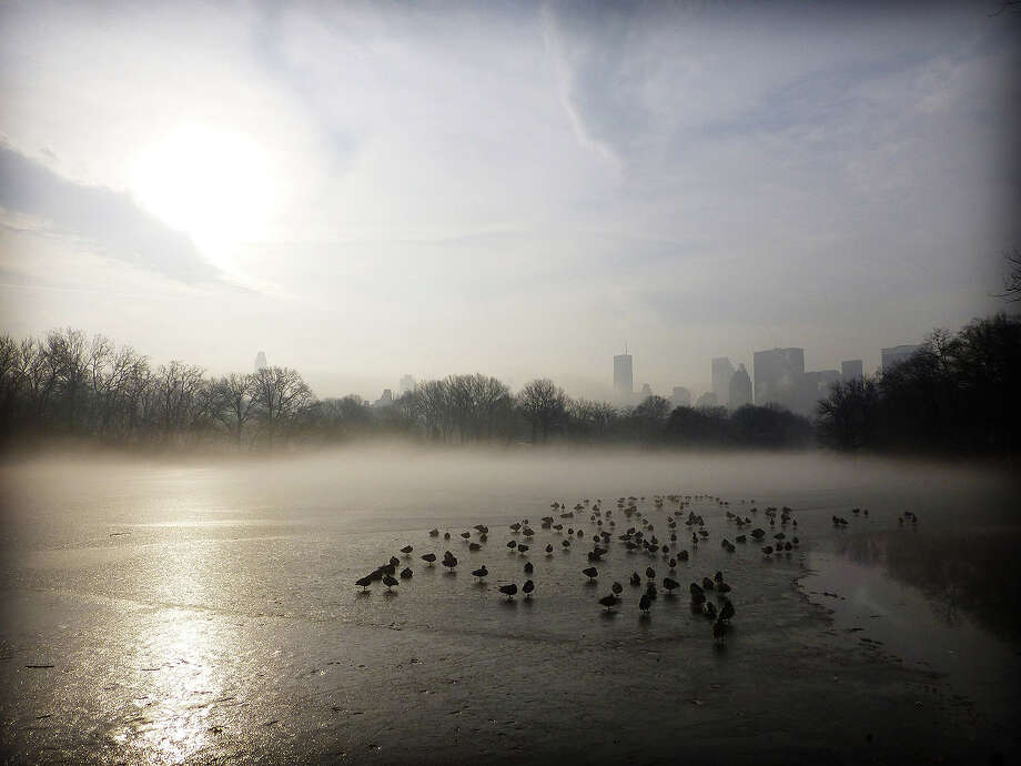 Quacks in the ice: Ducks sleep on a frozen pond in fog-shrouded Central Park, Manhattan. Photo: Chris Preovolos, Hearst Newspapers