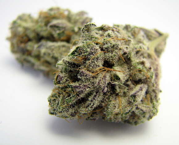 Steer clear of indicas and indica dominant hybrids like this Blackberry Kush if you want to make it to the fourth quarter. Photo: Picasa