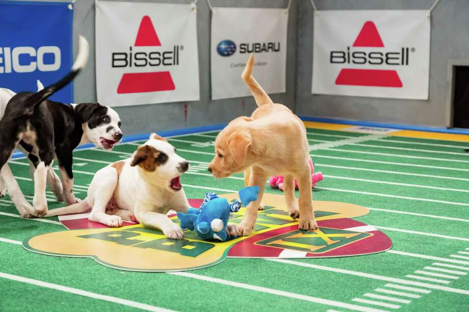 Before you settle in for some football, make sure you check out the Puppy Bowl from 3 to 5 p.m. Sunday on Animal Planet. Click here for more information.  (AP Photo/Animal Planet, Keith Barraclough) Photo: Keith Barraclough