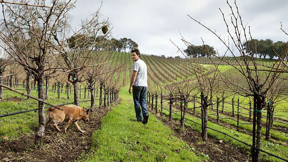 Anthony Yount and Waylon inspect the Grenache vines last month at Denner Estate Vineyards in Paso Robles. Photo: Scott R. Kline, Special To The Chronicle