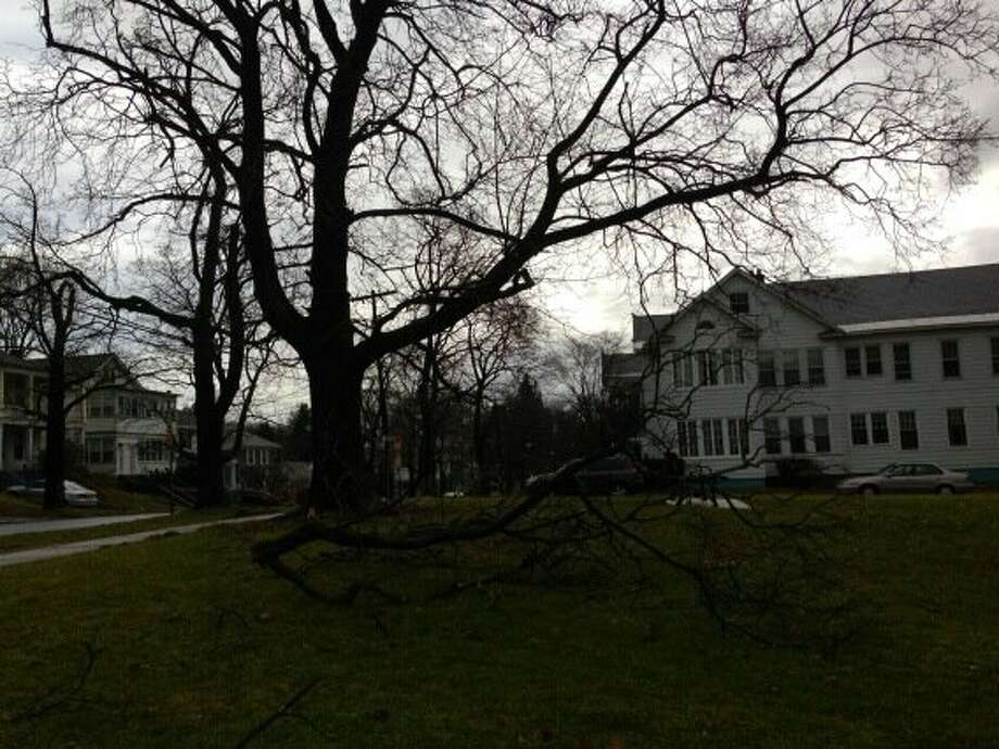 A large tree limb is down on Peyster Street in Albany after an evening of high winds and heavy rain. (Skip Dickstein / Times Union)