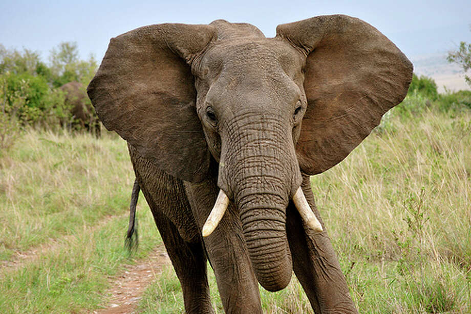 Elephants have to pay: If you leave an elephant at a parking meter in Florida, you better pay up. An elephant requires the same fee as any vehicle.(Photo: Brittanyhock, Flickr)Source: TrueCar.com Photo: Flickr