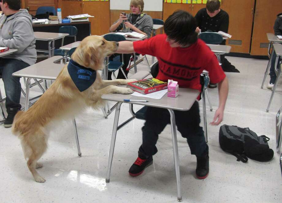 "In this Jan. 14, 2013 photo, a student pets Junie, the school's ""therapy dog,"" at Prospect High School in Mt. Prospect, Ill. Stress, anxiety and panic attacks are on the rise at many U.S. high schools, due to heightened academic expectations and troubles at home made worse by the shaky economy. So some schools are trying unconventional methods, such as therapy dogs, to help students cope. (AP Photo/Martha Irvine) Photo: Martha Irvine, STF / AP"