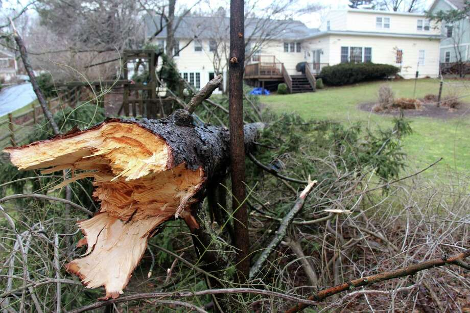 The force of heavy winds toppled this evergreen tree in the backyard of the Juniper Road home of Board of Education member Mark Mathias. Photo: Contributed Photo, Mark Mathias / Westport News