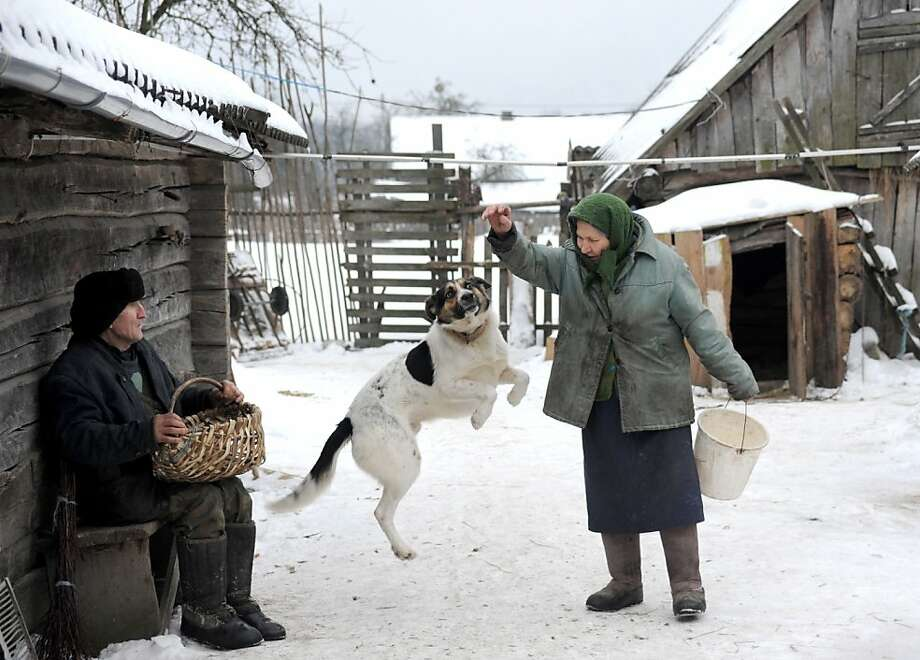 Babushka country:Olga Pashuk's dog leaps for a treat in the Belarus village of Priterpa. Photo: Viktor Drachev, AFP/Getty Images