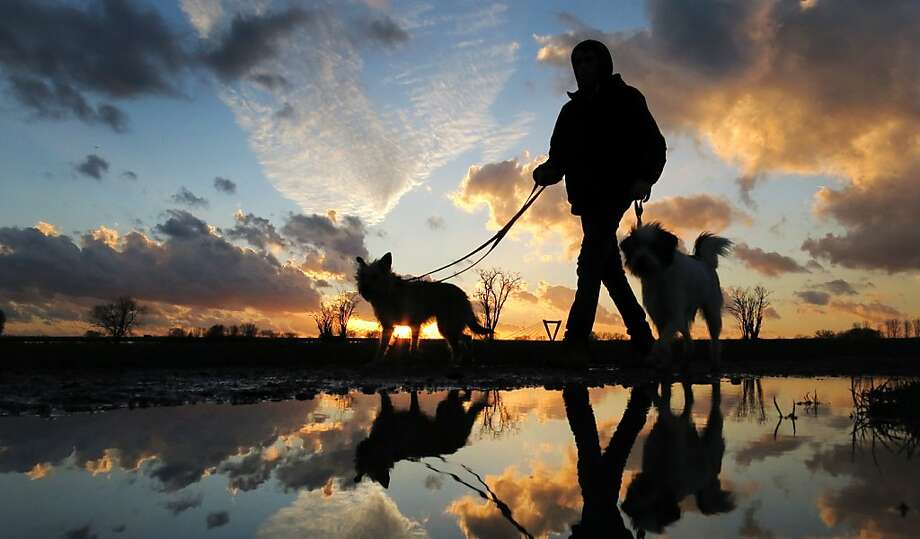 Sunset stroll: A puddle reflects a dog walker and his two best friends on the Rhine meadows in Duesseldorf, Germany. Photo: Martin Gerten, Associated Press