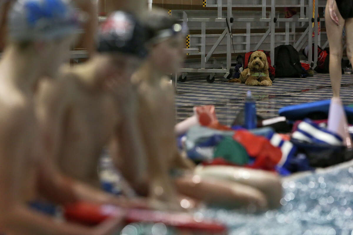Dakota sits patiently as his owner, Churchill swimmer Ben Ownby, left, with teammates, practices with the Alamo Area Aquatics club team at Josh Davis Natatorium in San Antonio on Tuesday, Jan. 29, 2013.