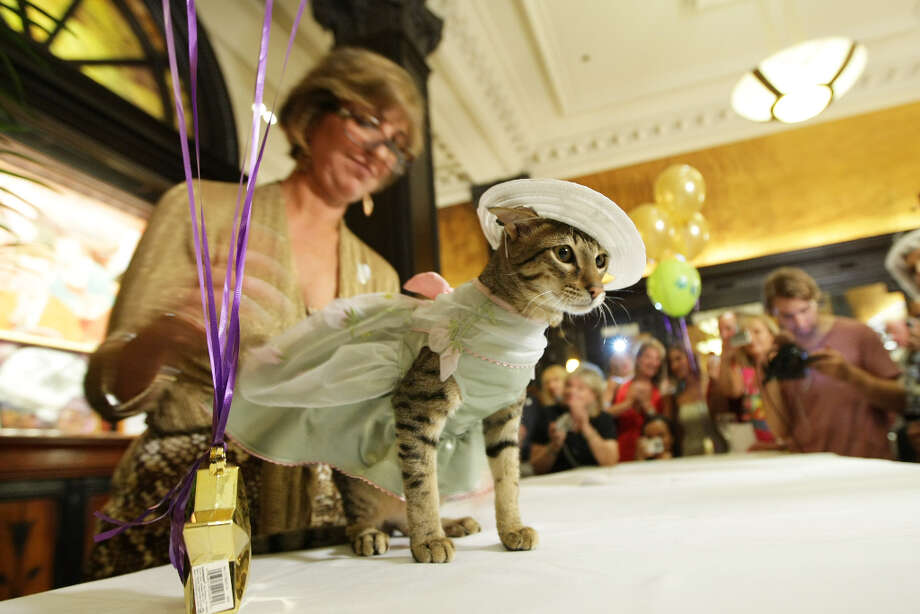Cats on display during the cat fashion show at the birthday party for Matilda, The Algonquin's resident cat in 2009. Photo: Neilson Barnard, Getty Images / 2009 Neilson Barnard