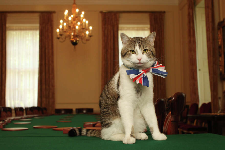 Larry, the Downing Street cat, in the Royal Wedding spirit. Photo: WPA Pool, Getty Images / 2011 Getty Images