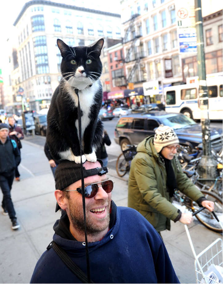 Cat on the Hat Charles Perito walks around West 23rd St with his cat Nick on his head.  (Andrew Savulich/NY Daily News Archive via Getty Images) Photo: New York Daily News Archive, NY Daily News Via Getty Images / 2009/Daily News, L.P. (New York)