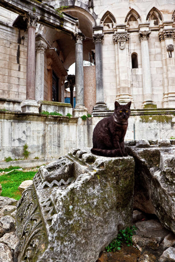 Cat in Peristilo in Split, Croatia, April 2009. Photo: Luis Davilla / Cover