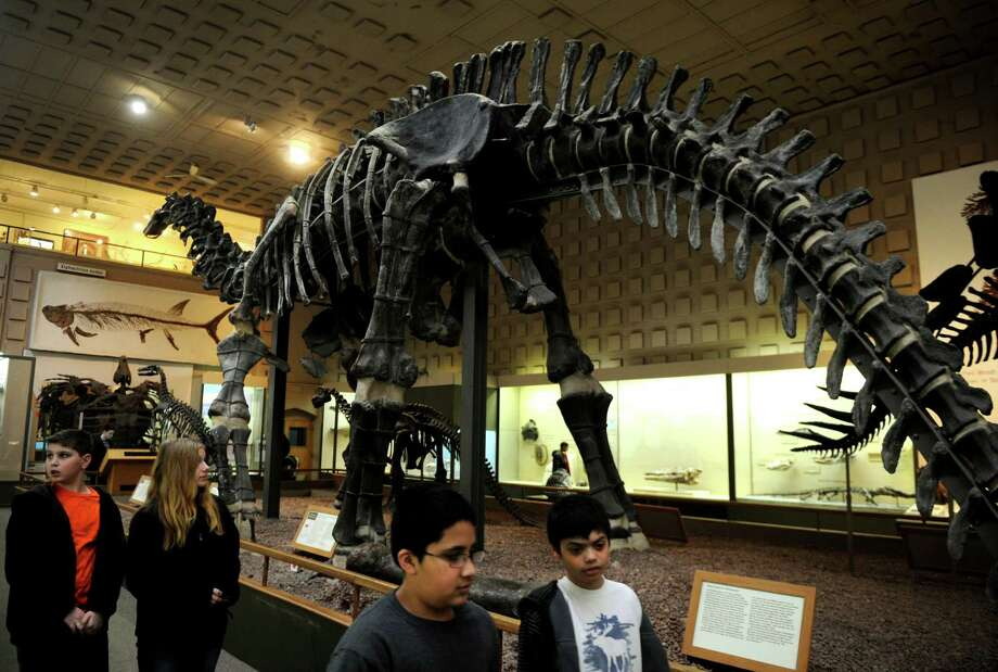 The dinosaur hall at the Peabody Museum in New Haven will be shut down for two years for renovations beginning in January 2014, when mounts like the Apatosaurus will be repositioned to have their tails in the air, reflecting the current scientific consensus. Photo: Brian A. Pounds / Connecticut Post