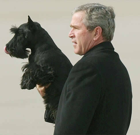 "Barney, 2000-2013: Barney, the Bush-era ""First Dog"" died February 1st from lymphoma. Photo: DUANE A. LAVERTY, AP / STR"