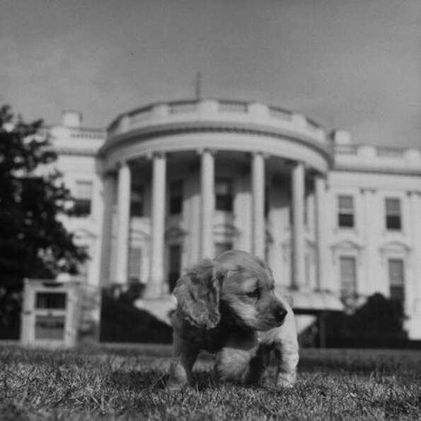 Harry Truman said that if you want a friend in Washington, get a dog. His dog was Feller.