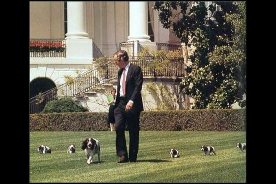 George and Barbara Bush loved their Millie -- and her puppies.