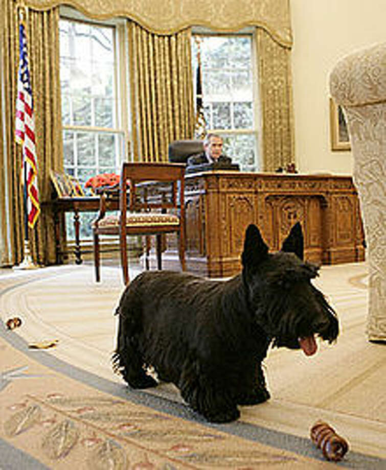 Barney guards the Oval Office.