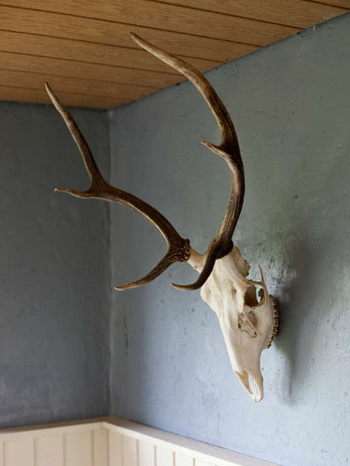 "Taxidermy""Animal heads and fake animal heads with antlers on walls!"" —Susan B. Photo: Getty Images/fStop"