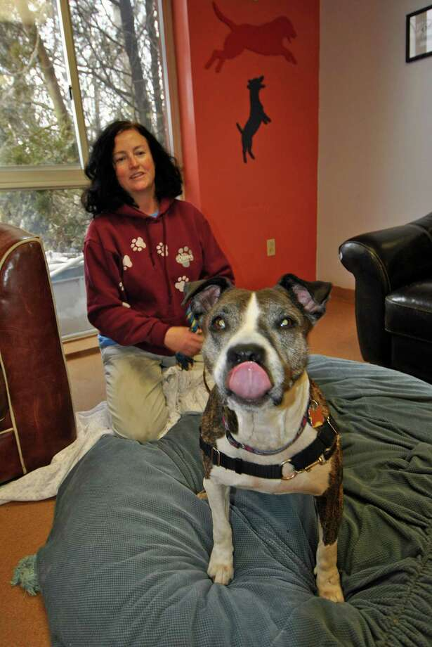 Lanie, one of the older dogs up for adoption at PAWS, still acts like a puppy during play time with volunteer Annie Madden on Tuesday. Sticking out her tongue is not unusual as she is known for giving kisses. Photo: Jordan Osterhout/For The Norwalk
