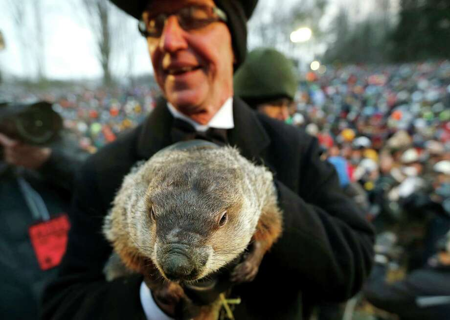 Groundhog Club co-handler Ron Ploucha holds the weather predicting groundhog, Punxsutawney Phil, after the club said Phil did not see his shadow and there will be an early spring, on Groundhog Day, Saturday, Feb. 2, 2013, in Punxsutawney, Pa. (AP Photo/Keith Srakocic) Photo: Keith Srakocic, Associated Press / AP