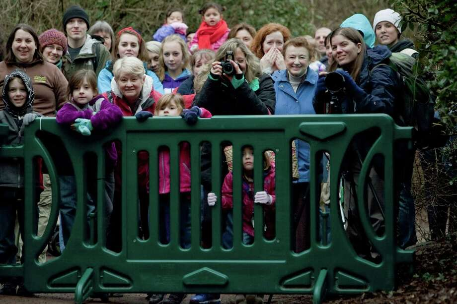 A few lucky zoo visitors on Saturday were able to catch a glimpse of the cubs from behind a gate, about 75 feet away from the viewing window. Photo: JOSHUA TRUJILLO / SEATTLEPI.COM