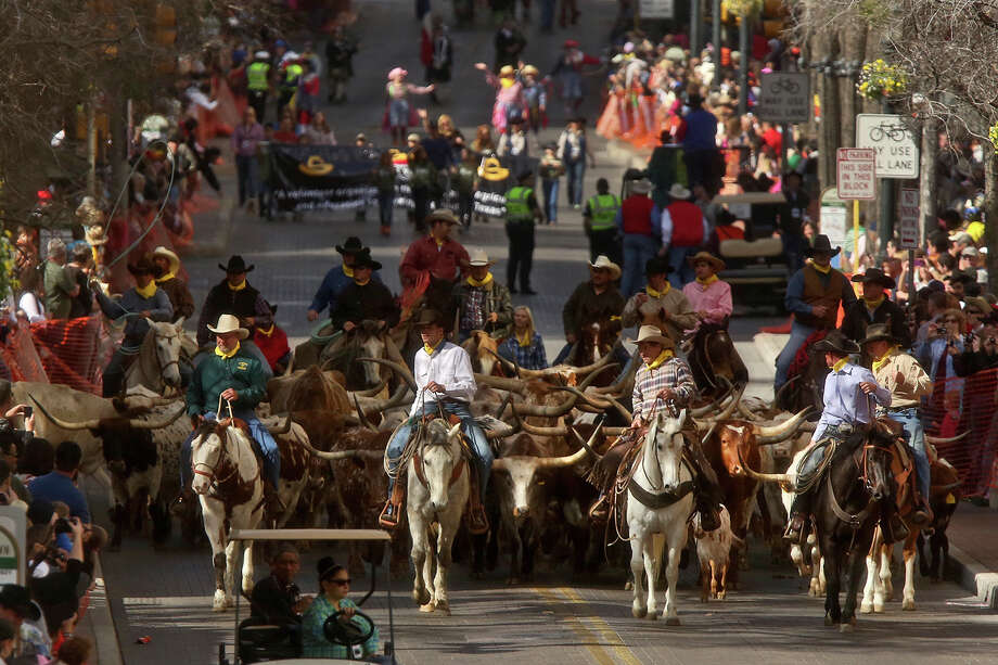 The Cattle Drive, followed by the Western Heritage Parade, moves along Houston Street through downtown San Antonio on Saturday, Feb. 2, 2013. Photo: Lisa Krantz, San Antonio Express-News / © 2012 San Antonio Express-News