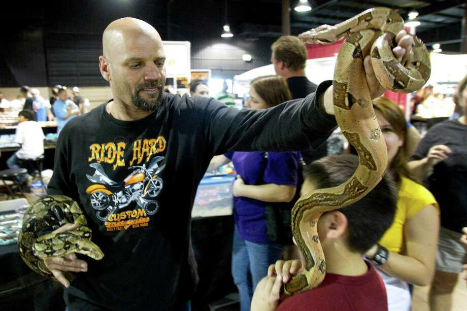 Danny Chessher puts a boa constrictor onto Caleb Litton's neck during Repticon reptile and exotic animal convention at the Pasadena Convention Center and Fairground Saturday, Feb. 2, 2013, in Pasadena. Photo: Brett Coomer, Houston Chronicle / © 2013 Houston Chronicle