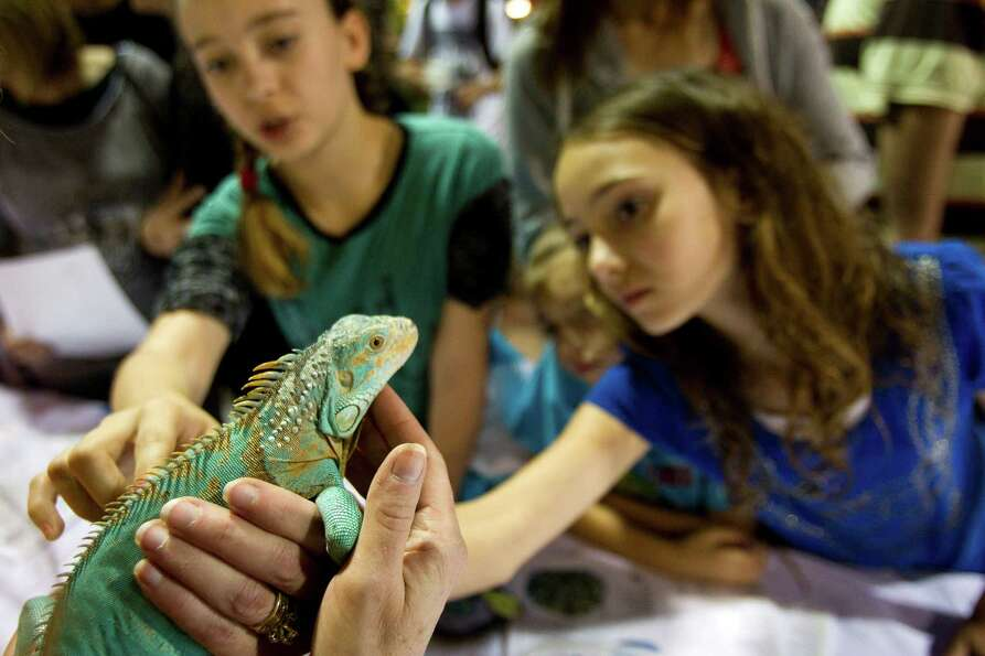 Trinity Thomas, 13, left, and Treya Thomas, 10, pet an iguana during Repticon reptile and exotic ani