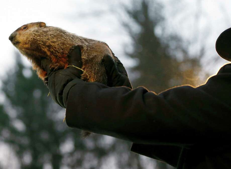 Groundhog Club Co-handler John Griffiths, left, holds the weather predicting groundhog, Punxsutawney Phil,  after he was taken from the stump before the club said Phil did not see his shadow and there will be an early spring on Groundhog Day, Saturday, Feb. 2, 2013, in Punxsutawney, Pa. (AP Photo/Keith Srakocic) Photo: Keith Srakocic
