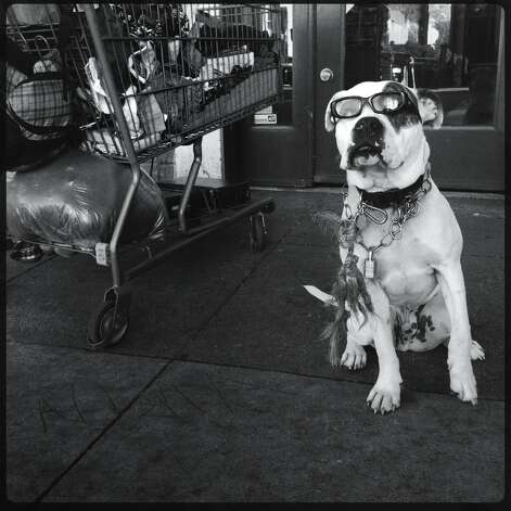 A dog named Backup on Haight Street. - Mike Kepka @cityexposed Photo: Mike Kepka, The Chronicle / ONLINE_YES