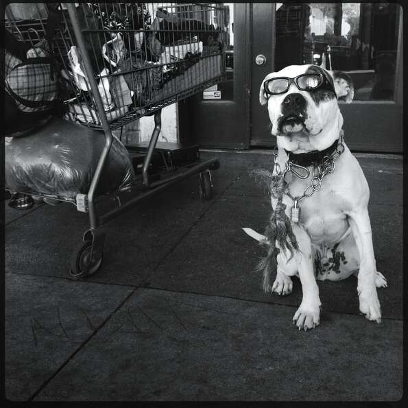 A dog named Backup on Haight Street. - Mike Kepka @cityexposed